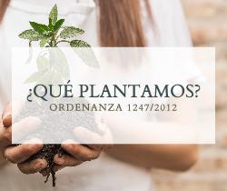 ¿Qué plantamos?